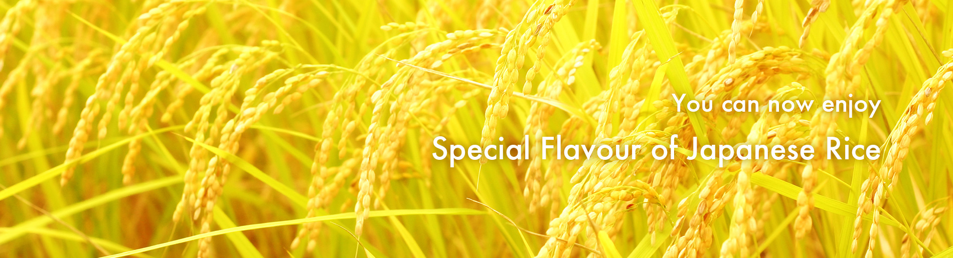 Special flavour of Japanese Rice